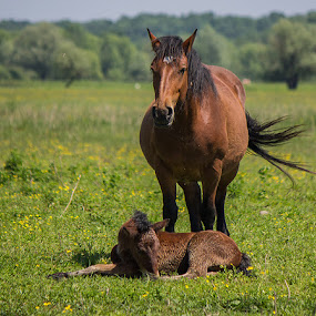 by Jasenka LV - Animals Horses (  )