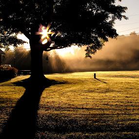 Morning Drama by Dorothy Koval - Landscapes Prairies, Meadows & Fields ( tree, morning light, sunrisevermont, fog, star, golden light, mist, Tree, Nature, Sky )