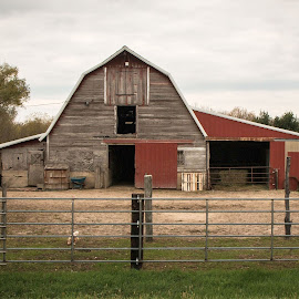 Old barn by Bee Klemzak - Buildings & Architecture Other Exteriors ( farm, old buildings, barn, old barn, farming )