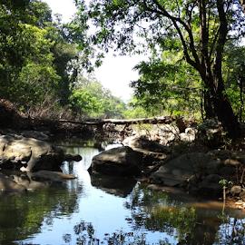 Simlipal Tiger Reserve, Odisha, IN... by Gautam Tarafder - Landscapes Forests