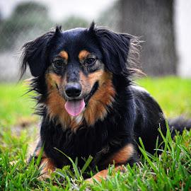 Maria by Rebecca Frank-Rusnak - Animals - Dogs Portraits ( black dog, girl, yard, grass, puppy, dog )