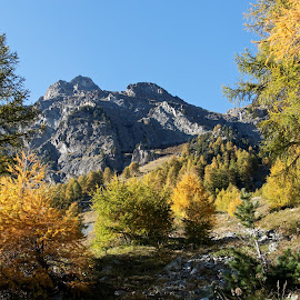 500d_2011101409233 by Serguei Ouklonski - Landscapes Mountains & Hills ( mountain, larix, wood, pine woodland, no person, land, leaf, valley, travel, landscape, nature landscape, mountains, sky, nature, tree, pine tree, pinaceae, no people, switzerland, larch, water, wild, conifer, scenics, lake, tourism, forest, scenic, beauty in nature, graubunden, environment, season, blue, fall, outdoors, trees, day, scenery, daylight )