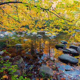 Autumn in the Park by Carol Ward - Landscapes Waterscapes ( tn, fall colors, autumn, great smoky mountains national park, reflections, trees, rocks, smoky mountains )