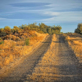 Morning road by Gaylord Mink - Landscapes Travel ( trees, read, gravel, shadows )
