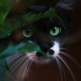 close up by Prakash Tantry - Animals - Cats Kittens ( contrast, cat, colorful, eyes, close )