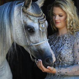 Arabian Princess by Diana Cantey - Animals Horses (  )