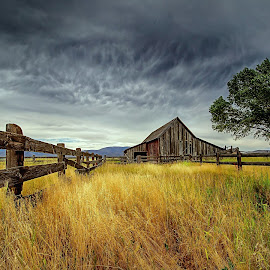 The Old Barn by Lee Molof - Landscapes Prairies, Meadows & Fields