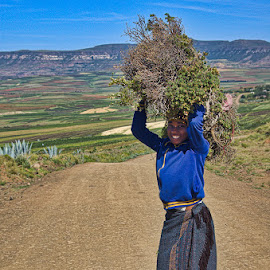 Kindling For The Fire by Garry Dosa - People Street & Candids ( kindling, person, carrying, woman, shadow, outdoors, lesotho,  )
