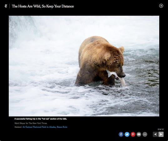 Katmai National Park for the New York Times