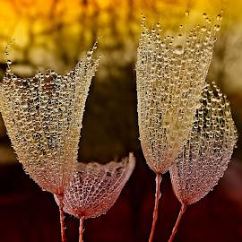 Glasses Of Happiness by Marija Jilek - Nature Up Close Natural Waterdrops