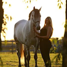 Natural Frame by Emma Reeves - Animals Horses ( equine photography, irish sport horse, horses, sunset, emma rose photography )