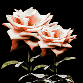 TWO ROSES by Carmen Velcic - Digital Art Abstract ( abstract, red, roses, brown, flowers, digital )