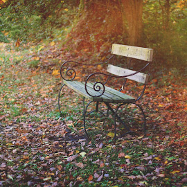 Alone time  by Victoria Graham - Artistic Objects Furniture ( autumn bench leaves )