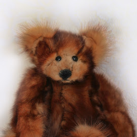 Little Bear by Carole Pallier Cazzazsnapz - Artistic Objects Toys ( bear, toy, furry, play, paws, teddy )