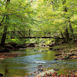 by Kimberly Sharp - Landscapes Forests ( nature, beautiful, creek, maryland, trees, forest, bridge )