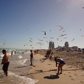 South BEach by Carlito Rivera - Landscapes Beaches ( miami, beach, people, birds, south beach,  )