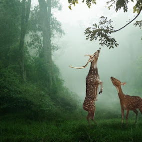 breakfast by Budi Cc-line - Digital Art Things ( fog, wildlife, deer )