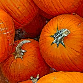 Orange Pumpkins by Edward Gold - Digital Art Things ( digital photography, group of orange pumpkins, artistic, orange pumpkins, colorful, digital art, group,  )