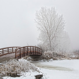 Fog Ice by John Kehoe - City,  Street & Park  City Parks ( crystals, winter, tree, fog, ice, snow, scene, bush, bridge,  )