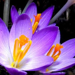 by Martin Stepalavich - Flowers Single Flower (  )