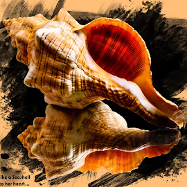 Seashell 1 by Dave Walters - Typography Quotes & Sentences ( typography, nature, seashell, photoshop, lumix fz2500, colors )