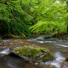 by Siniša Almaši - Nature Up Close Water ( water, up close, stream, nature, trees, forest, view, stones, landscape, light, photography, dslr, river )