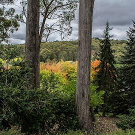 Mt Lofty Botanic Garden by Sharon Wills - Landscapes Forests ( forrest, flora, south austrralia, mount lofty botanic gardens, plants, trees, forest,  )