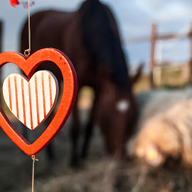 Learn to love differences by Sara Verdini - Artistic Objects Other Objects ( a sheep, a single heart, a horse )