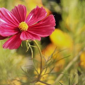 by Anja Kroes - Flowers Flowers in the Wild (  )