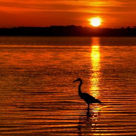 by Edward Allen - Landscapes Sunsets & Sunrises