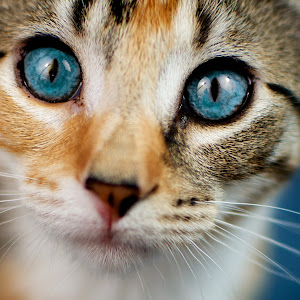 kitten eyes.jpg