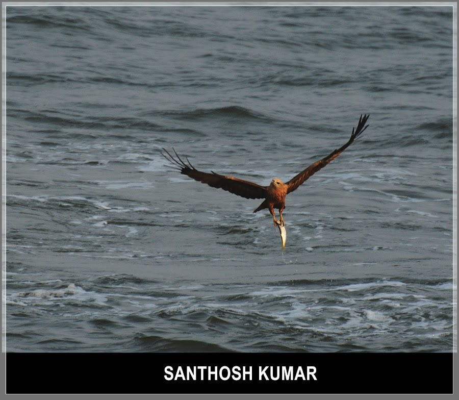 Food for the day by Santhosh Kumar - Animals Birds