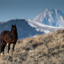 Wild and Free by Brian Perkes - Animals Horses