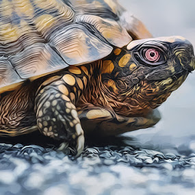 by Paula Eagle - Animals Reptiles ( turtle )