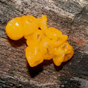Witches'Butter
