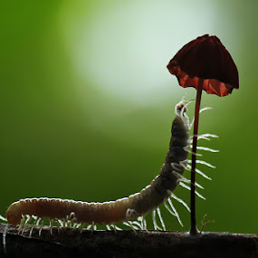 by Dwi Sudarmawan - Animals Insects & Spiders ( macro, nature )