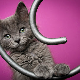Speck by Eric Christensen - Animals - Cats Kittens ( kitten, orphan, rescue, grey, spiral )