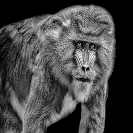 by Judy Rosanno - Black & White Animals ( houston zoo, may 2018 )