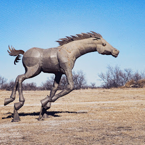 Iron Horse by Starla Sims - Animals Horses ( horse )