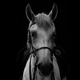 Rider of the night by Jan Kršinar - Animals Horses ( black and white, loneliness, horse, scared, lonely, portrait, animal )
