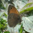 Small Heath; Níspola