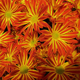 by Liz Hahn - Flowers Flower Arangements