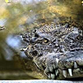 by Muhamad Soleh - Animals Reptiles