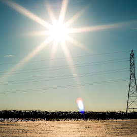 The king shines. by Aldrin Atanu - Landscapes Prairies, Meadows & Fields ( field, michigan, blue sky, winter, post, electrical, sunny, meadow, prairie, pure michigan, sun )