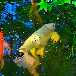 Color, direction and more by Robin Stover - Animals Fish