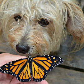 Lucy loves nature by Isabelle VM - Animals - Dogs Portraits ( butterfly, monarch, dog )