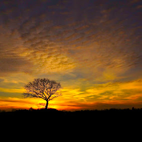 Tree in sunset by Kim Moeller Kjaer - Landscapes Sunsets & Sunrises (  )