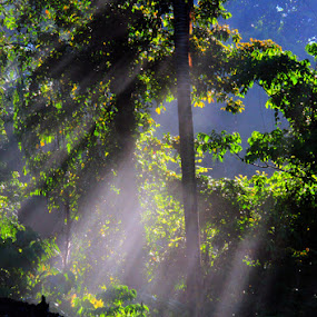 Ray of Light from behind a tree by Ronny Buol - Nature Up Close Trees & Bushes ( tree, rol )