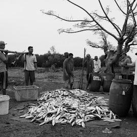 Panen Bandeng by Mulawardi Sutanto - Black & White Portraits & People ( panen, indonesia, bandeng, indramayu, travel, tambak )