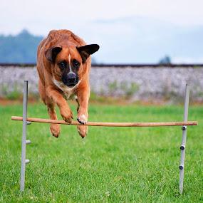I'am scared! by Daniel Mlakar - Animals - Dogs Portraits ( funny, dog, jump )